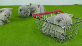 Katje die van een boodschappenwagentje met voedsel voor huisdieren eten stock videobeelden