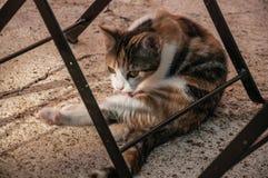 Katje die zijn bont in een landbouwbedrijf likken royalty-vrije stock foto's