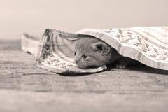 Katje door een handdoek wordt behandeld die stock foto