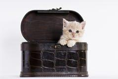 Katje in een doos Royalty-vrije Stock Fotografie