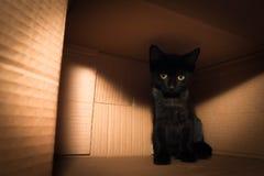 Katje in een doos Royalty-vrije Stock Foto's