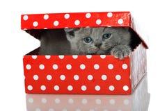 Katje in een doos stock foto