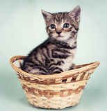 Katje in een geweven mand Stock Afbeelding