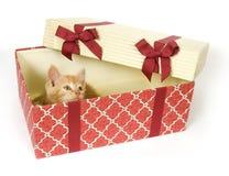 Katje in een giftdoos Stock Foto