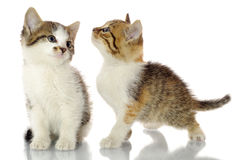 Katje in een giftdoos Royalty-vrije Stock Afbeeldingen