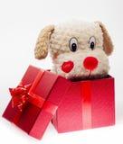 Katje in een giftdoos Stock Foto's