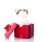 Katje in een giftdoos Royalty-vrije Stock Foto's