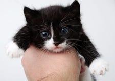 Katje in een hand Royalty-vrije Stock Afbeeldingen