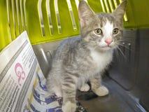 Katje in een kooi Stock Afbeelding