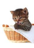 Katje in een mand Stock Afbeelding