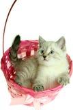 Katje in een mand Stock Fotografie