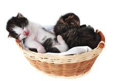 Katje in een mand Royalty-vrije Stock Foto