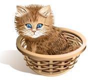 Katje in een mand Stock Foto