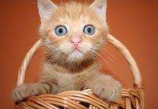 Katje in een mand Royalty-vrije Stock Fotografie