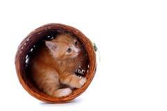Katje in een mand die op wit wordt geïsoleerd royalty-vrije stock fotografie
