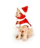 Katje in een santakostuum royalty-vrije stock foto's