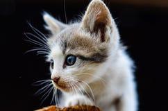 Katje in een tuin royalty-vrije stock foto's
