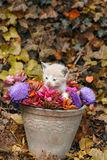Katje in een vaas Stock Foto