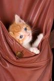 Katje in een zak Royalty-vrije Stock Foto's