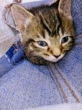Katje in een zak stock afbeelding