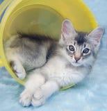 Katje in emmer Stock Afbeelding