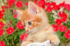 Katje en bloem stock afbeelding