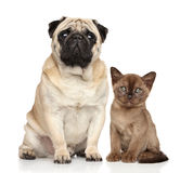 Katje en hond samen Royalty-vrije Stock Afbeelding