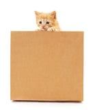 Katje en karton Royalty-vrije Stock Afbeeldingen