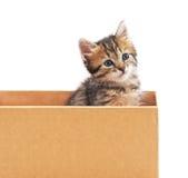 Katje en karton Royalty-vrije Stock Foto's