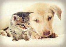 Katje en puppy Royalty-vrije Stock Foto's