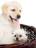 Katje en puppy Royalty-vrije Stock Foto