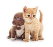 Katje en puppy Stock Afbeelding