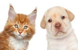 Katje en puppy De gelukkige jonge zakken van de meisjesholding op een witte achtergrond Royalty-vrije Stock Afbeelding