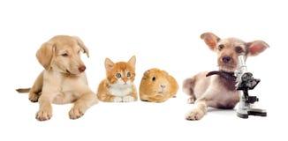 Katje en puppy en proefkonijn stock foto's