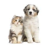 Katje en puppy geïsoleerde zitting, stock foto's