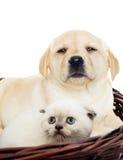 Katje en puppy naast Stock Afbeelding