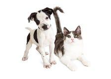 Katje en puppy samen Royalty-vrije Stock Foto's