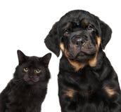 Katje en puppyreeks op wit wordt geïsoleerd dat Royalty-vrije Stock Foto