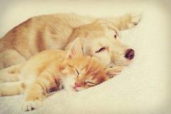 Katje en puppyslaap stock afbeelding