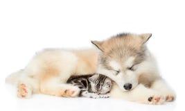 Katje en puppyslaap samen Geïsoleerdj op witte achtergrond royalty-vrije stock afbeeldingen