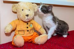 Katje en teddybeer Royalty-vrije Stock Fotografie