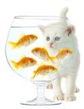 Katje en vissen Stock Fotografie