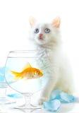 Katje en vissen Stock Foto's