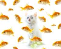 Katje en vissen Royalty-vrije Stock Foto