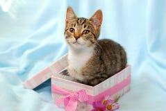 Katje in giftdoos Royalty-vrije Stock Foto
