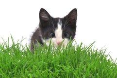 Katje in gras Stock Afbeeldingen