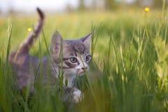 Katje in gras Stock Foto's