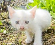 Katje in het gras Stock Afbeeldingen