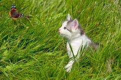 Katje in het gras Royalty-vrije Stock Afbeeldingen