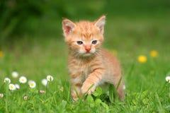 Katje in het gras Stock Foto's